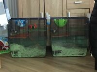2 x gerbils (female)