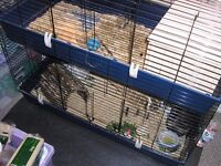 2 x House Rabbits FREE TO GOOD HOME