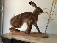 TAXIDERMY ADORABLE HARE WITH BABY