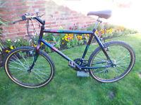 adult mountain bike ammaco daiquiri fully working