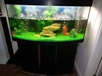 4 ft fish tank with cabinet for sale