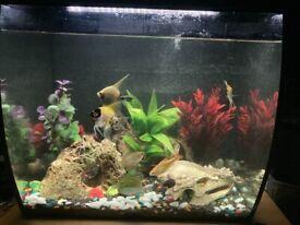 Flex 57 litre tropical/freshwater tank + fish