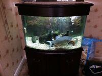 3ft solid oak fish tank