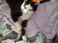 Missing Black and White Cat, Rathfriland/Magheral area