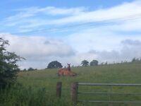 Grass Livery near Lanark 15 pw per horse