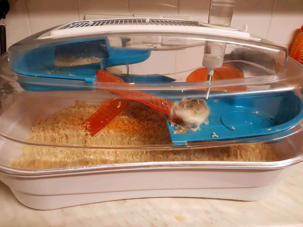 Hamster looking for a forever home