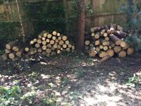Logs, large quantity of