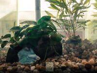 Fluval Chi 2 Aquarium 19 ltr deluxe fish tank + a lot of goodies!