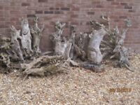 LOT of 12 original DRIFTWOOD PIECES, 2 with carved faces. Selling as a LOT ONLY