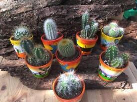 Cactus cacti succulent in funky pot gif