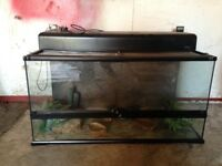 Lizard vivarium 3ft with everything you need