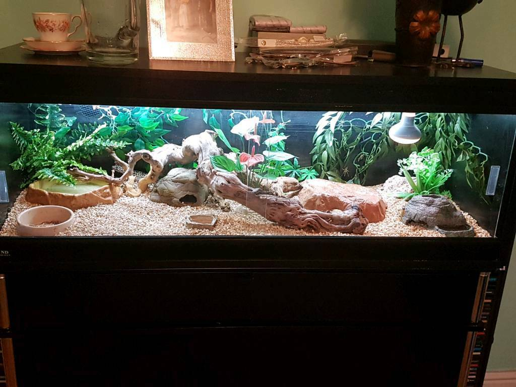 3 Leopard Geckos And 4ft Set Up In Portsmouth Hampshire