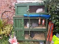 Rabbits+hutches
