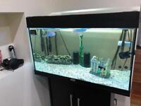 Fish Jewel tank 125liters for sale