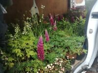 Qualified Gardener in Edinburgh & The Lothians