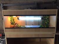 Baby bearded dragon and new vivarium setup