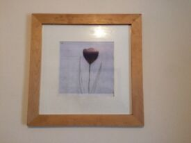 Framed picture of a purple tulip