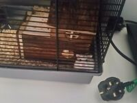 Dwarf Russian Hamster with cage
