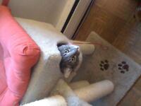 Oscar D Cat