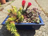 Indoor mix succulents