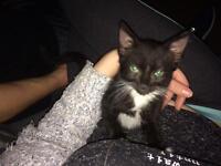 Very friendly 12 week old kitten