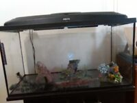 Fish tank with fitted cabinet and accessories