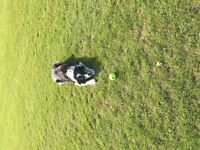 Friendly and professional pet sitting, dog walking and dog boarding service-competitive prices