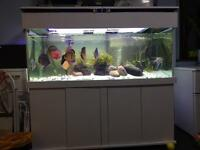 Fish Tank With Full Set Up