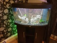 Juwel Aquarium Rio 180L - With Cabinet + Full Setup