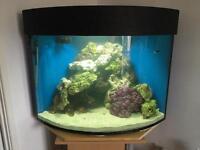 Fish tank marine 360L corner tank