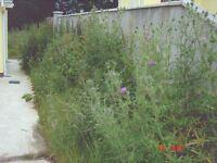 Garden landscaper: Fencing, Deck, building maintenance hedges, & lawns cut. Major garden clearence
