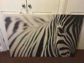 Zebra photo Canvas