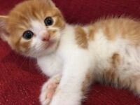 Kitten Boys Brothers- Most Sweet