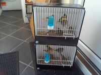 For Sale Fife Canaries