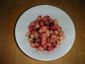 Oca And Yacon Tubers