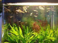 Tropical Gappy fish