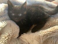For sale Kittens for loving caring homes