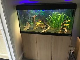 FOR SALE - Fluval 200 ltr Fish Tank including fish