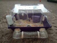 Russian Dwarf Hamster
