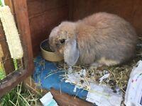 FREE - Rabbit, hutch and run