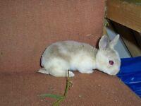 rabbit manure compost