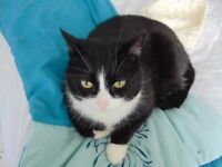 Lovely Cat for possible Rehoming