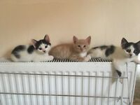 Kittens looking for a new family