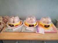 3 x mini 7 egg automatic digital egg incubators for sale plus clip on heat lamp
