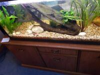 160 litre Aquarium with lights & filter