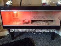 2 corns snake male and female 4 foot viv with heat lamp