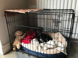 Medium size dog crate with cover