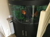 Juwel Tringo 190L Bow front Aquarium full Setup for sale £195