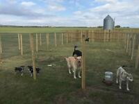 New! Vacation Kennels N Doggy Daycare