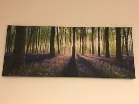 Canvas print of blue bell wood